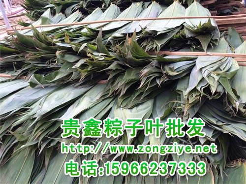 嘉兴包粽子箬竹叶子